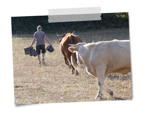 notre troupeau