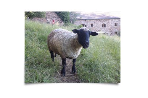 Madame Grasse notre mouton retraité