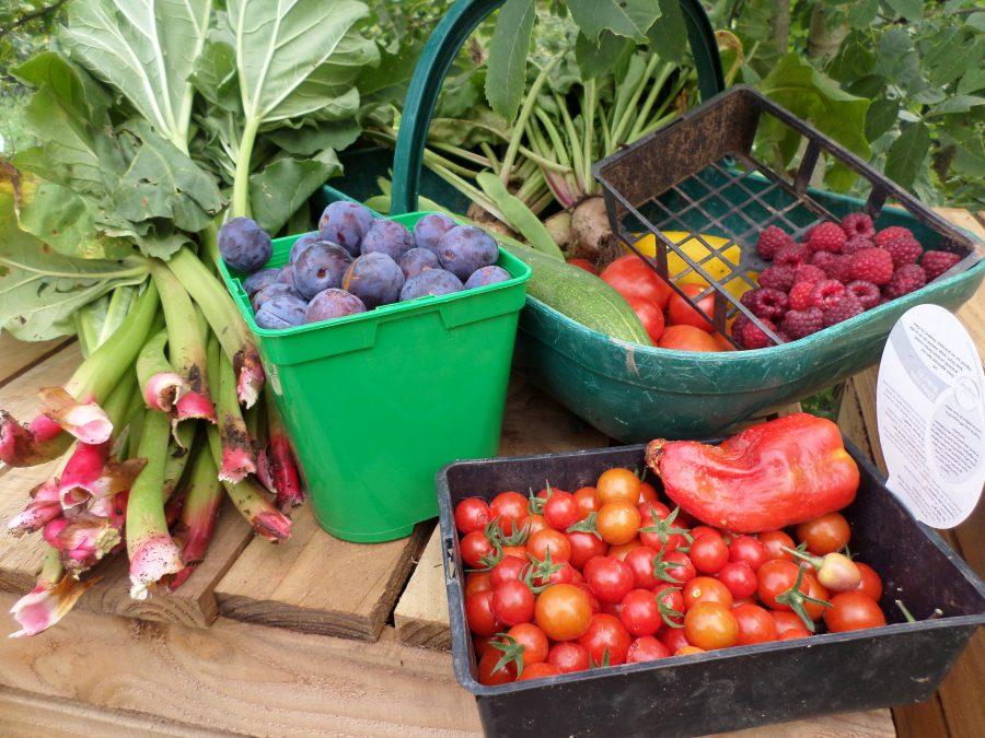 fruits et légumes du potager