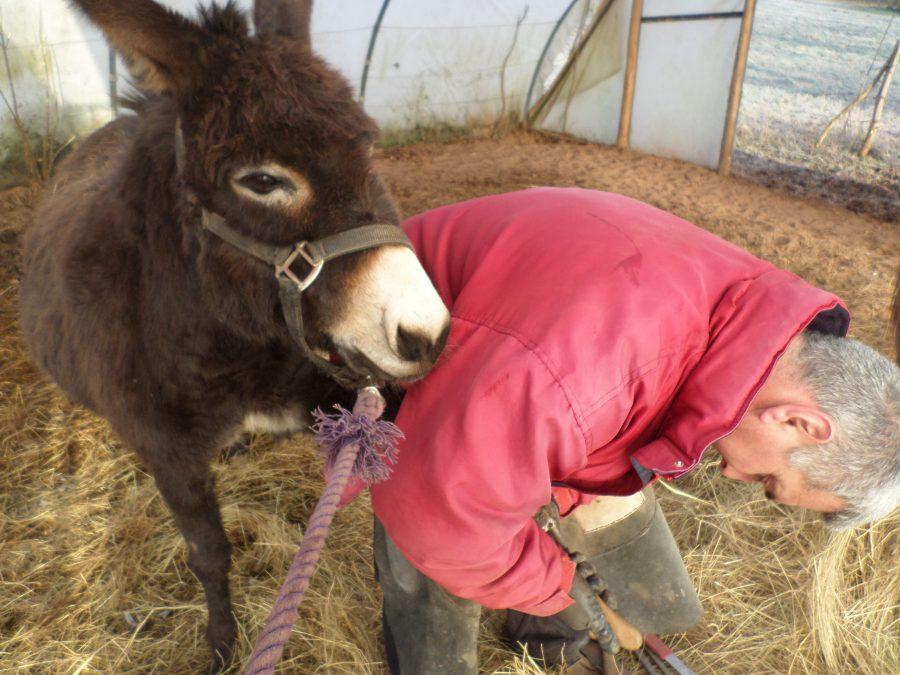 une pédicure pour les ânes