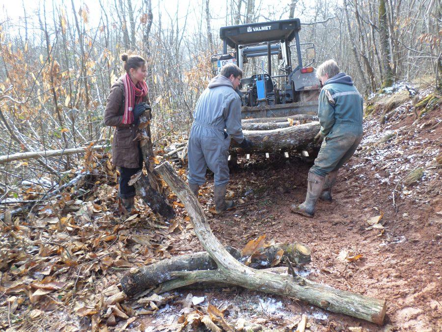 nettoyage des bois