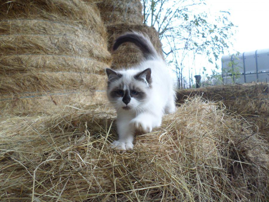Tempête le petit chat de la ferme