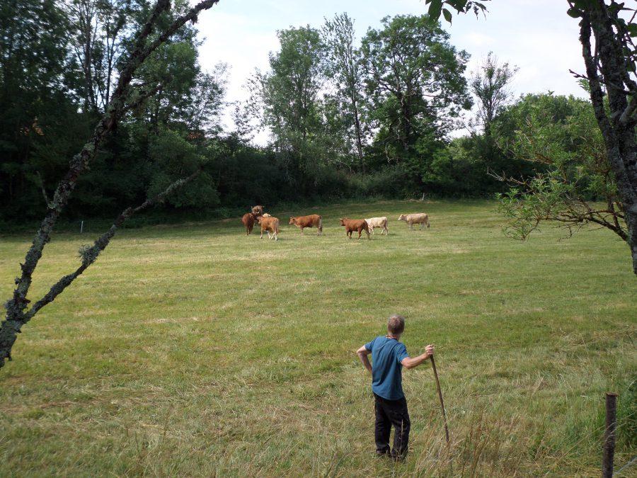 le troupeau dans les champs