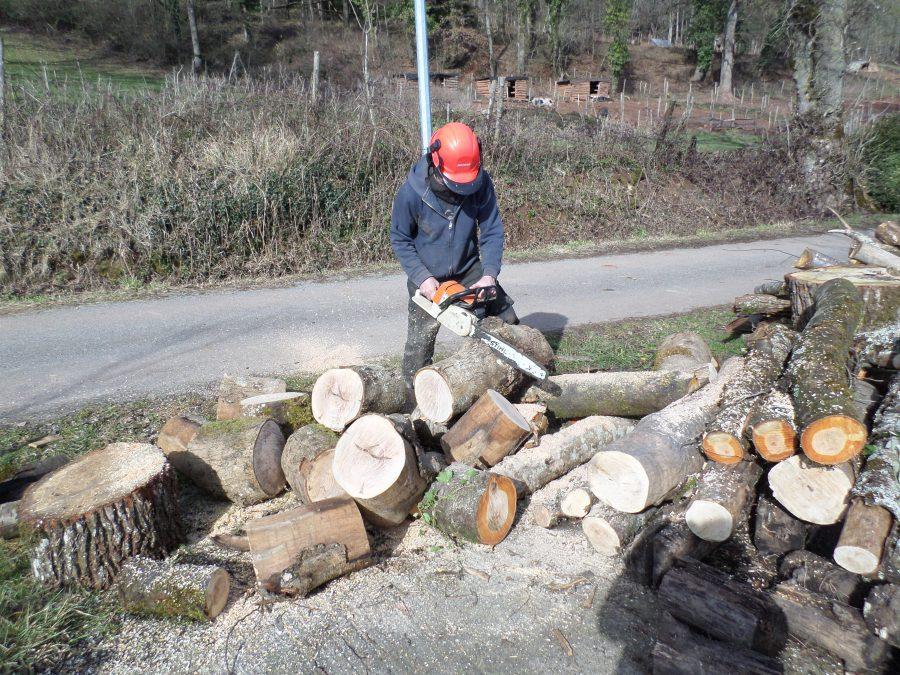 coupage du bois